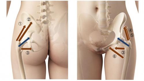 筋機能に基づく股関節2