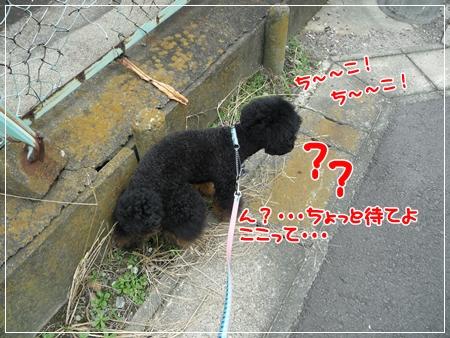 P1060010_1.jpg