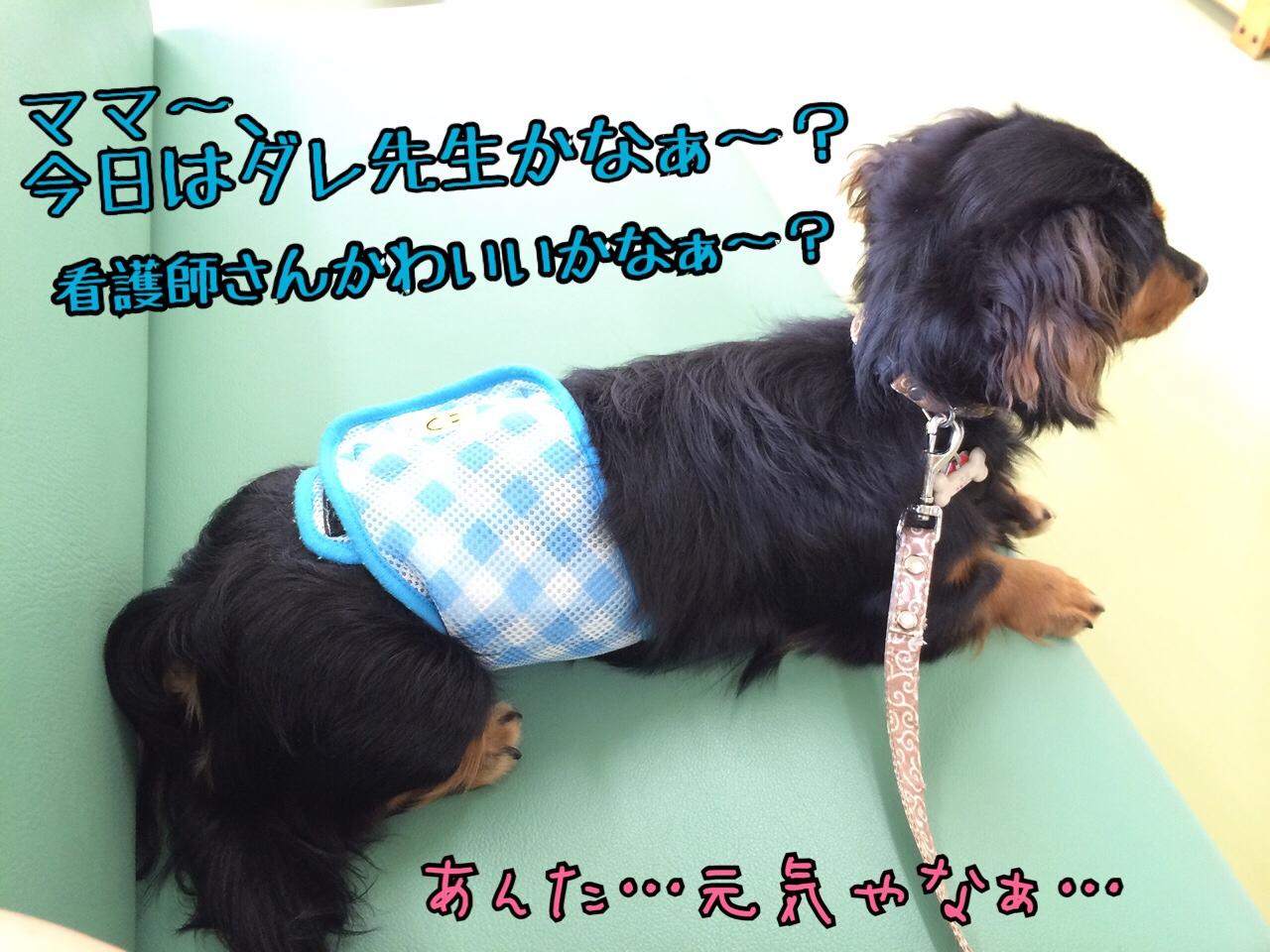 fc2blog_2014082923412946e.jpg