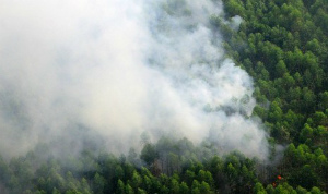 smoke-rises-from-burning-forest.jpg