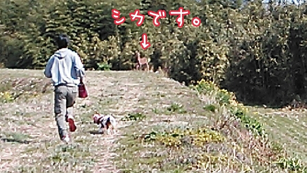 fc2_2014-03-26_21-59-14-499.jpg