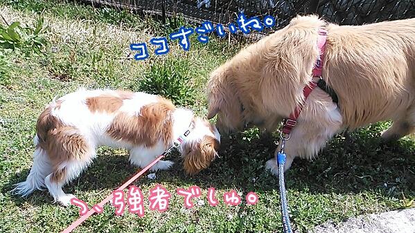 fc2_2014-04-14_20-31-07-514.jpg