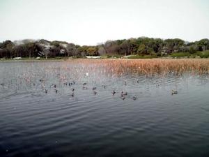 大泉緑地 大泉池(2012年撮影)