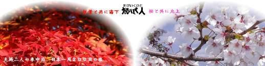 momizisakura1-1.jpg