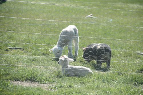 羊の国のラブラドール絵日記シニア!!「忙ちいのあたち」写真2