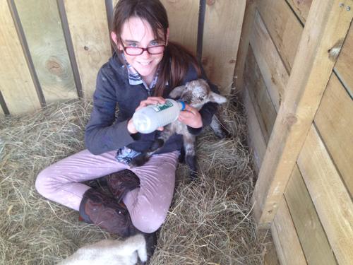 羊の国のラブラドール絵日記シニア!!「子羊は突然に!」2