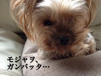 fc2blog_201402281645368ac.jpg