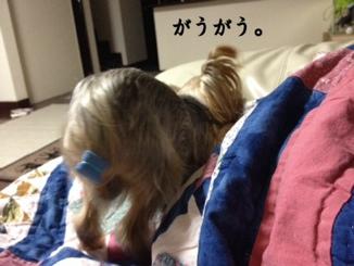 fc2blog_201403072204362d2.jpg