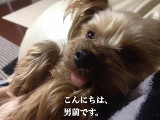 fc2blog_20140311162122eab.jpg