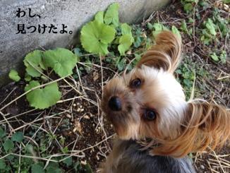 fc2blog_20140316221254b3d.jpg