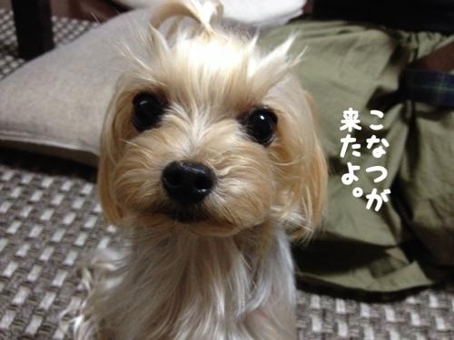 fc2blog_2014070221150249e.jpg