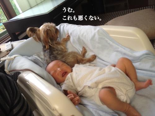 fc2blog_20140716011042472.jpg