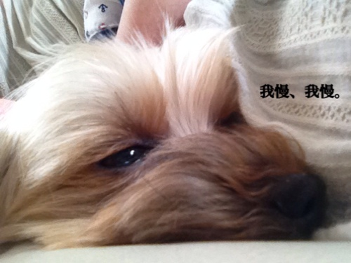 fc2blog_20140722215237c57.jpg