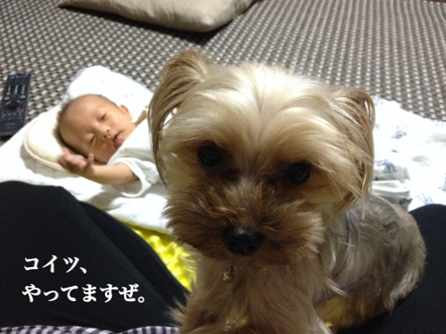 fc2blog_20140731003800528.jpg