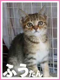banner_fuu_boshu.jpg