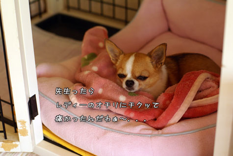 DSC095361010.jpg