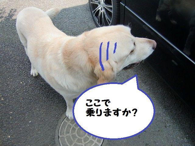 CIMG1359.jpg