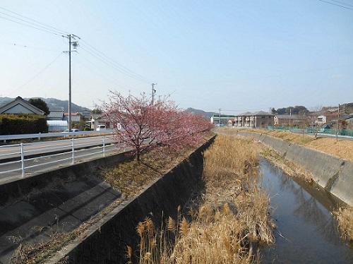 sakasan-sakura-20140226-2.jpg