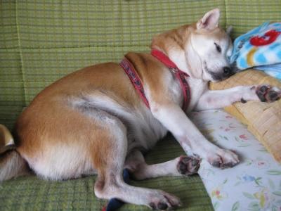 座布団は枕を高くして寝るときにも役立ちます