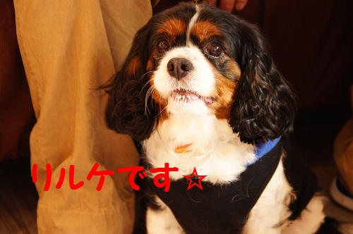 201405021812102b0.png