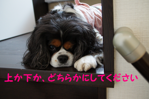 20140510131421683.png