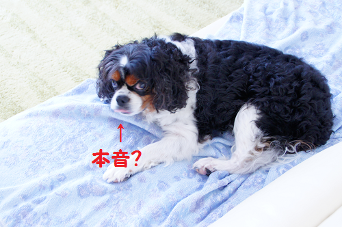 20140715163546a85.png