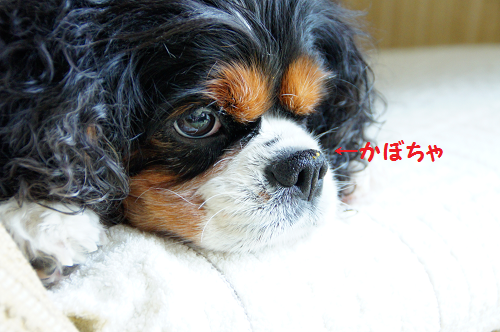 2014071715341344c.png