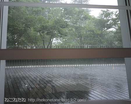 集中豪雨の様子