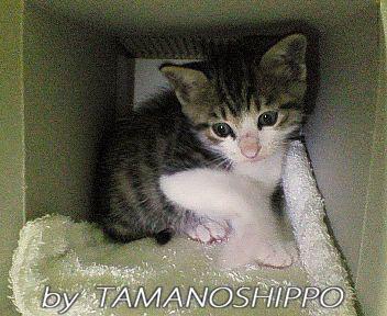 箱に入って隠れる子猫