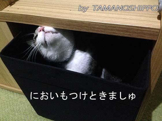 家具にニオイをつける猫