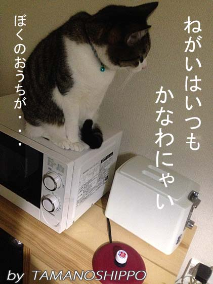 家具の上に乗る猫