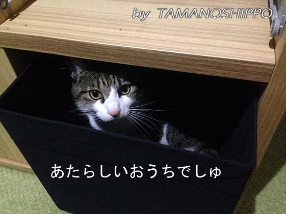 箱(入れ物)に入る猫