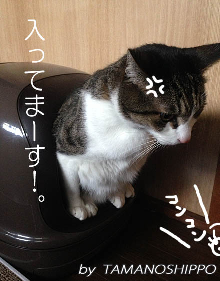 おトイレ中の猫(ちび)