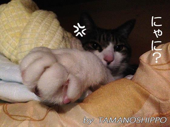 熟睡中に起こされて不機嫌な猫(押入れの中)