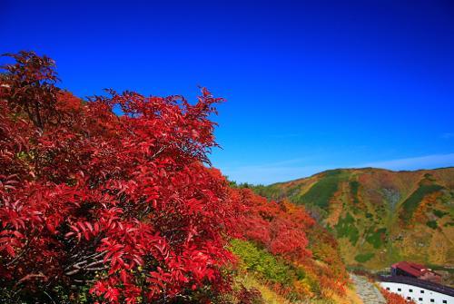 山の紅葉0909