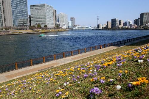 春の味 ・・・ サムネイル画像