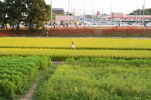 矢勝川-10