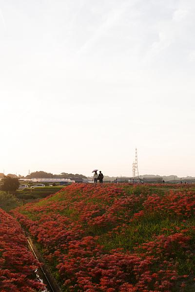 矢勝川-12