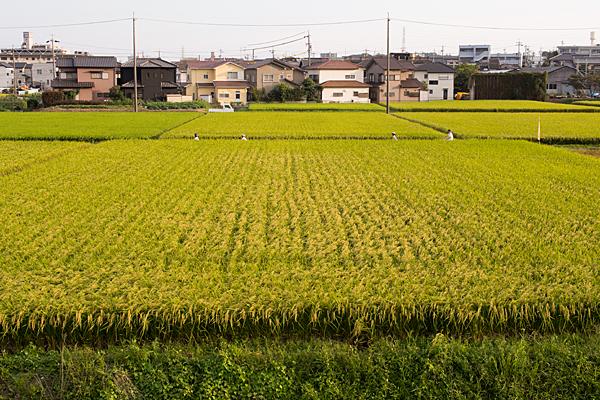 矢勝川-8