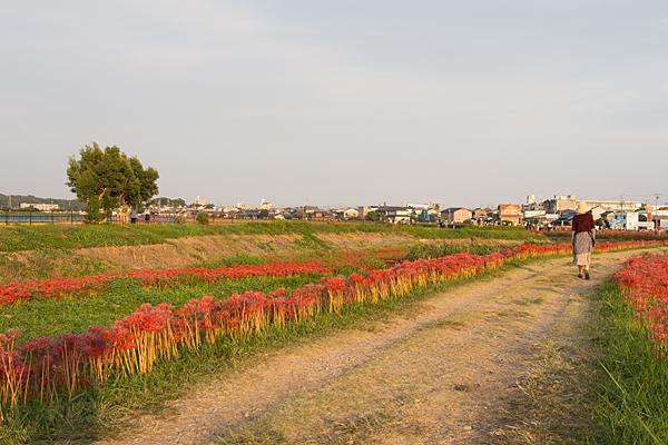矢勝川-7