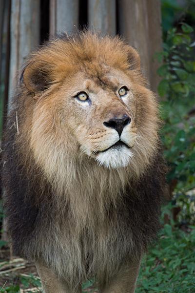 東山動物園-13