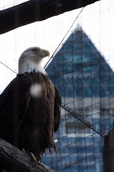 東山動物園-2