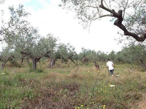 アサクラ農園(2)