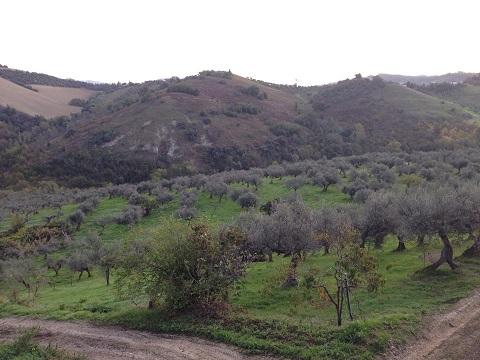 2014アサクラ農園