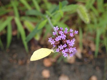 my-garden 064 (2)