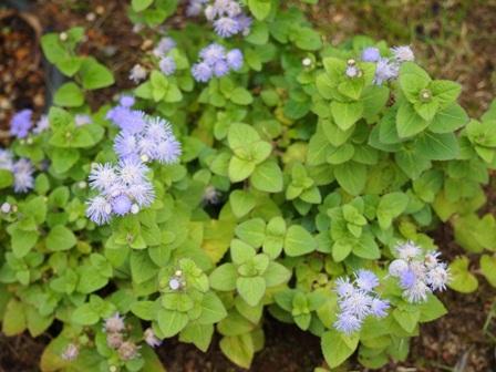 my-garden 006 (4)