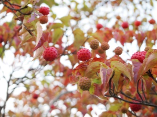 my-garden 045 (2)