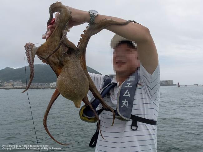 巨大マダコを釣ったおっさん