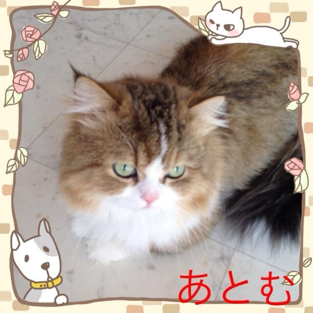 moblog_cac9987d.jpg