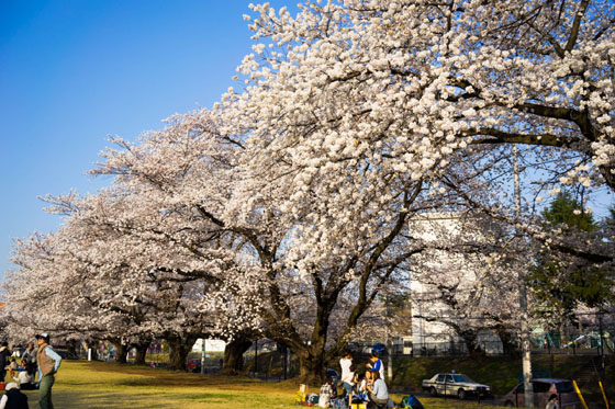 inariyama20142.jpg